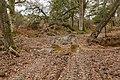Warwickslade Cutting, driving across the stream - geograph.org.uk - 1570840.jpg