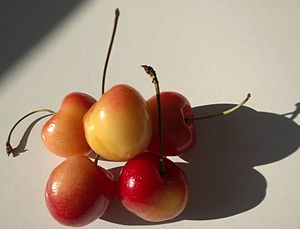Cherry - Rainier cherries from the state of Washington, USA