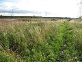 Weedy patch, Cockenzie - geograph.org.uk - 930861.jpg