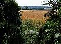 Wheat field, Hollowell - geograph.org.uk - 194374.jpg
