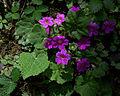 Whf purple 11a.jpg