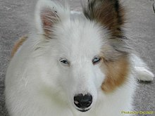 Image Result For Diseases Both Dogs