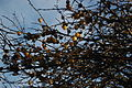 Wicken Fen - 8 December 2013 - Wicken Fen - 05.JPG