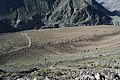 Wild Chillas, Gilgit Baltistan.JPG