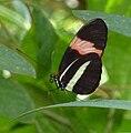 Wilhelma Schmetterling 4.jpg