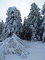 Willingen - Wintermärchen an der Große Grube - 2 - panoramio.jpg