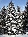 Winter in Kharkiv.jpg