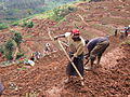 Women and men in northern Rwanda work on a public works site, building terraces to prevent soil erosion (8379227773).jpg