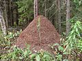 Wood ant mound.jpg