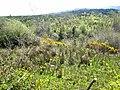 Wooded valley above Drumkeeran - geograph.org.uk - 797936.jpg