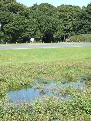 Climate-friendly gardening - Woodland and wetland in the New Forest, Hampshire