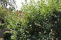 Wordsworth House 2015 52.jpg