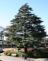 Xmas tree at Nakayama Racecourse.jpg