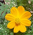 Yellow flower family-1.jpg