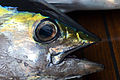 Yellowfin head in rabaul, Papua New Guinea.jpg