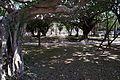 Yogi Park Naha Okinawa Japan06n3.jpg