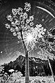 Yosemite (14359539058).jpg