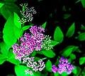Zirci arborétum virága 2.jpg