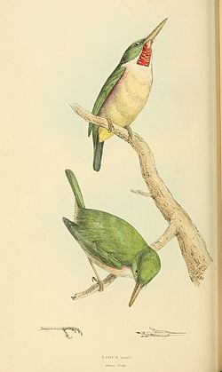 Zoological Illustrations Volume II Series 2 066.jpg