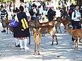 Zoshicho, Nara, Nara Prefecture 630-8211, Japan - panoramio - ESU (10).jpg