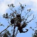 (1)Bats Centennial Park 025.jpg