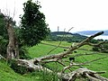 (Almost) Dead Tree - geograph.org.uk - 491733.jpg