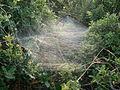 Örümcek ağı.JPG