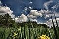 Łopuchówka - panoramio (75).jpg