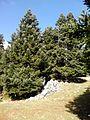 Παρνασσός - panoramio (1).jpg