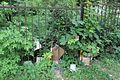 Ботанічний сад Сміття IMG 8367.jpg