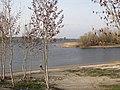 Вид Волги около пристани города Маркс, Саратовская область.jpg