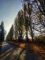 Дорога зі с. Буйволівці, фото 3.jpg