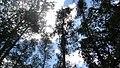 Дібрівський лісовий заказник.jpg