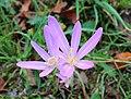 Заштићени природни пејзаж Јаворина 01.jpg