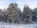 Касмалинский ленточный бор 2005 год. (Алтайский край. Россия).jpg