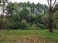 Квадрат 16 Теряевского лесничества.jpg