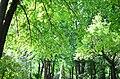 Наводницкий парк в Киеве. Фото 19.jpg