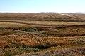На берегу речки Кураши. Вид в южном направлении - panoramio.jpg
