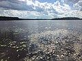 Нёлгомозеро (озеро) 1.jpg