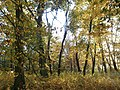 Парк відпочинку (старий парк над Стоходом), осінню 03.JPG