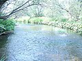 Река в самой глуби заповедника..jpeg