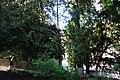 Тиси ягідні, Львів, вул. Мушака, 54.jpg