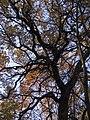 Украина, Киев - Голосеевский лес 136.jpg
