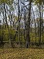Украина, Киев - Голосеевский лес 69.jpg
