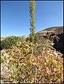 زیباییهای دره آشان - panoramio (2).jpg