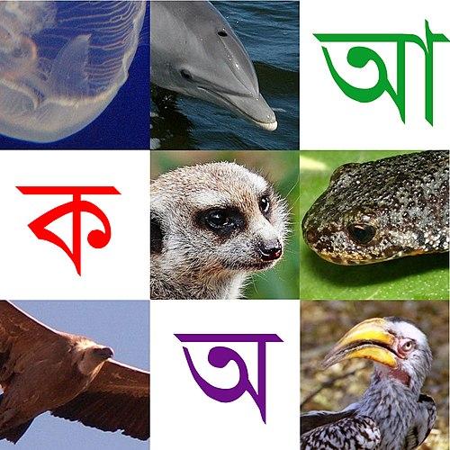 উইকিশৈশব:বর্ণমালায় প্রাণীজগৎ