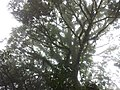 อุทยานแห่งชาติ แม่วงก์ - panoramio (3).jpg
