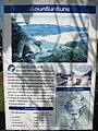 เขื่อนศรีนครินทร์ Srinagarind Dam - panoramio (6).jpg