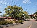 大樟树 - Big Camphor Tree - 2012.01 - panoramio.jpg