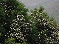 山边美景 - panoramio.jpg